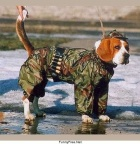 funny pictures Army Dog
